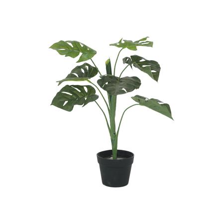 DELICIOUS MONSTER PLANT 60CM