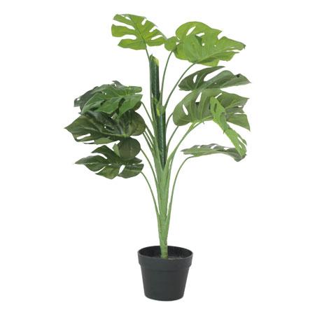 DELICIOUS MONSTER PLANT 90CM