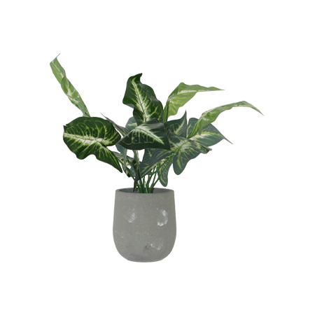 EVERGREEN POTTED PLANT 42CM