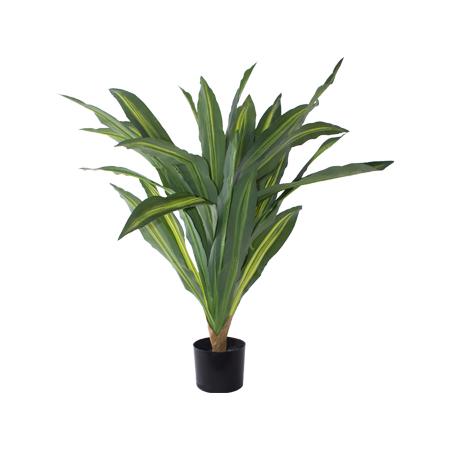 DRAGON PLANT IN POT 80CM