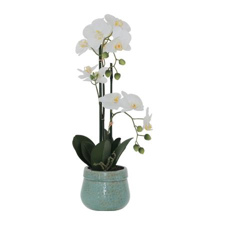 GREEN POT WHITE ORCHID 55CM
