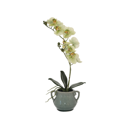 GREEN ORCHID IN GREY POT 40CM