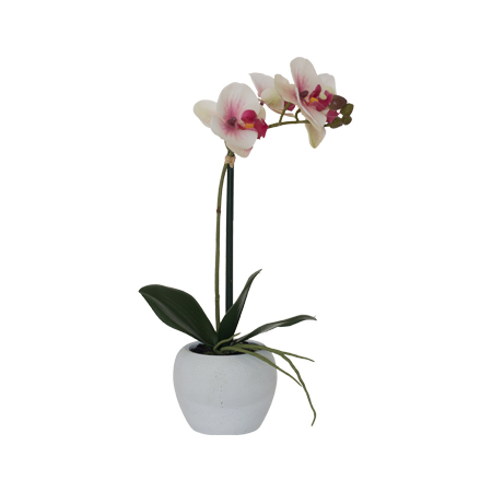WHITE/PINK ORCHID 51CM