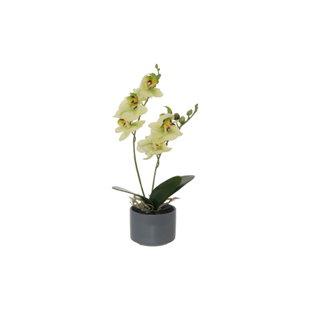 LIME GREEN REAL TOUCH ORCHID 28CM