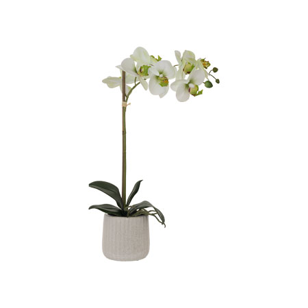 WHITE/GREEN ORCHID WHITE POT 48CM